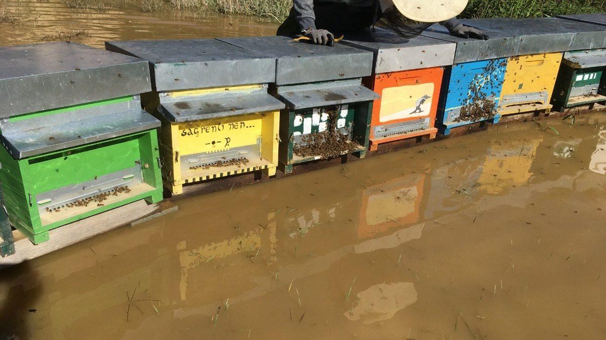 Attivata raccolta fondi per aiutare gli apicoltori piemontesi colpiti dall'alluvione