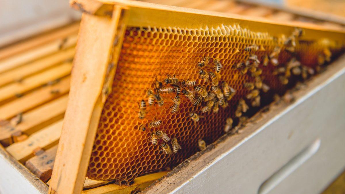 Sottosegretario Centinaio (Mipaaf): ristori anche per gli apicoltori e lotta all'invasione di miele adulterato